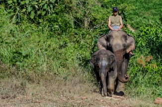 The Elephant Conservation Centre, Sayabury, Laos