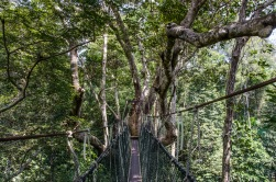 The Canopy Walkway in Taman Negara National Park, Malaysia