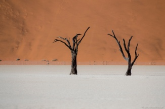 Sossusvlei, Deadvlei and Big Daddy Dune in Namib-Naukluft National Park, Namibia