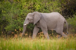 The Okavango Bushman, Wildlife In Botswana